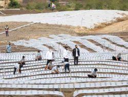 Jokowi Sebut 4 Lokasi di Sumut Jadi Food Estate Termasuk Tapteng