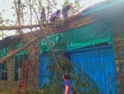 Sejumlah Pohon Tumbang Akibat Hujan Deras dan Angin Kencang di Tapteng