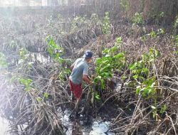 Pertamina Rehabilitasi Mangrove yang Rusak di TBBM Sibolga